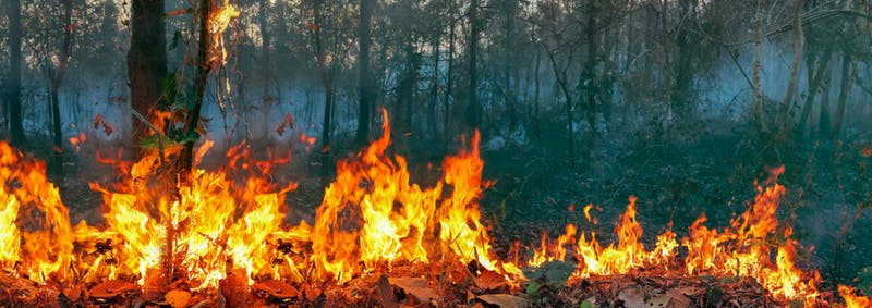 Executive Coaching, Bushfire donation